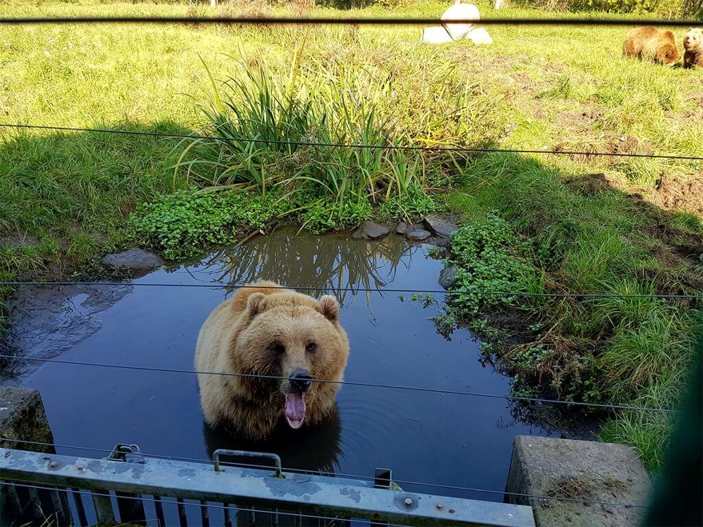 Wildpark Poing Braunbär